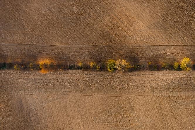 Strom, podzim, pole