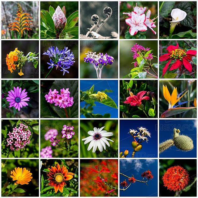 Květiny, flora, rostliny