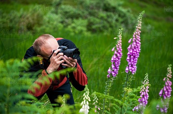 Fotograf, Náprstník červený, Digitalis purpurea