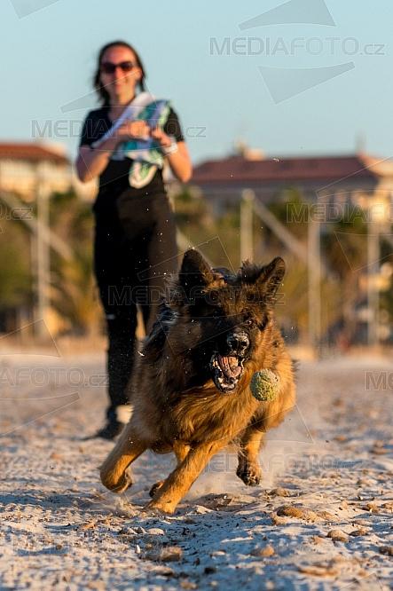 Pes, hra, míč, pláž
