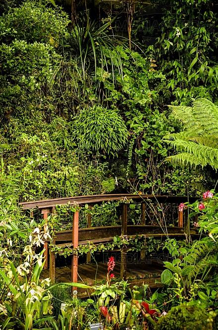 botanická zahrada, prales, tropický, most