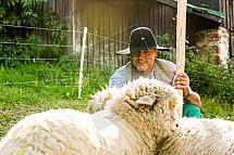 Bača, ovce, stádo, chovatelství, Zdeněk Vondruška