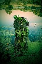 Dvorní rybník, Lvová, kmen, mech