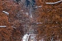 Liberec, Masarykova ulice