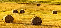 pole, sláma, balík, zemědělství