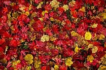 Podzim, barvy, listy, javor, lípa