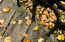 Podzim, list, lávka, most, zábradlí