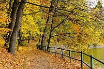 Podzim, strom, listí