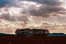 pole, les, strom, mraky