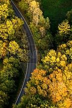 Silnice, les, podzim