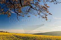 Podzim, Ještěd, louka