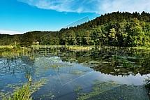 Dvorní rybník, Lvová