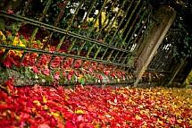 Podzim, barvy, listy, javor, lípa, plot