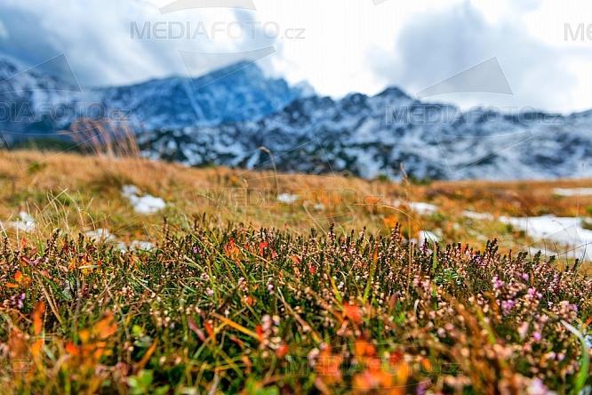 Vysoké Tatry, hory, podzim, flora