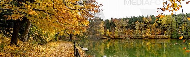 Podzim, strom, listí, přehrada