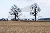 strom, louka, elektárna, Turów