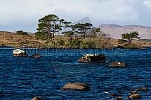 Jezero Lough Bofin, strom, kámen