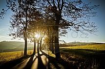 Alej, slunce, silnice, podzim