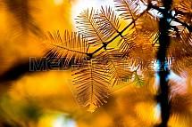 Podzim, jehličnan