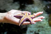 kvězdice, ruka, dlaň