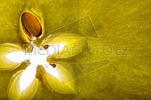 Jablko, rozkrojené jadřinec, jádro, pecka, detail