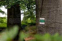 Turistika, značka, les, buk, kůra, strom