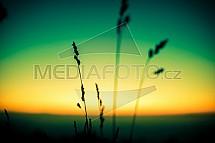 Západ slunce, tráva