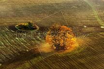 Strom, pole, zlato, krajina, letecky