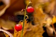 Podzim, bobule, plod
