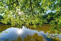 Rybník, slunce, strom