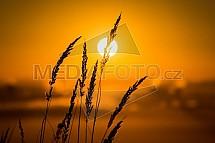 Východ slunce, tráva