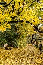 Podzim, strom, listí, lavička