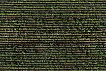 Zemědělství, pole, jaro, letecky