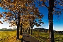 Silnice, alej, podzim