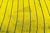 Pole, řepka, zemědělství
