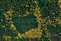 Les, podzim, letecky