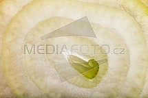 Cibule, detail, makro