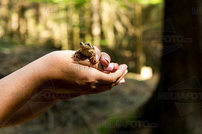 žába, les