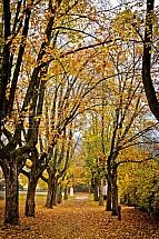 Podzim, Lidové Sady