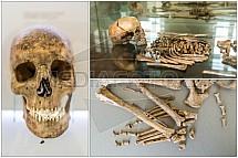 Lebka, kosti, kostra