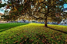 náměstí Svobody, strom, Valtice