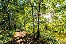 Slunce, strom, cesta, alej