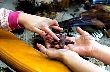 hvězdice, ruka, akvárium