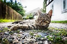 Kočka, silnice