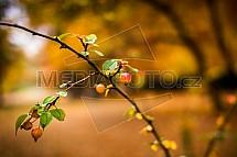 Podzim, keř, bobule