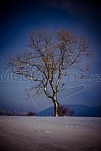 Strom, pole, zima