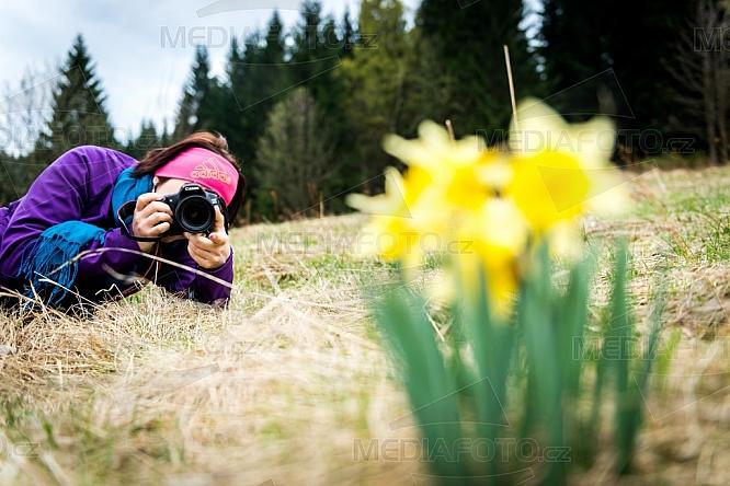 Narcis, jaro, fotograf