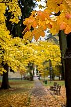 Podzim, listy, park, stromy