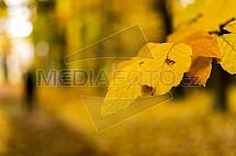 Podzim, list, buk