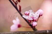 Květ, jaro